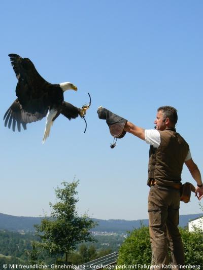 Falknerei Greifvogelpark Wunsiedel im Fichtelgebirge